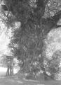 Mail tree.