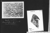 Fossils and Geology scrapbook [15]