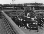 Cattle Industry P.5
