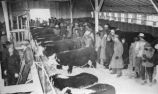 Cattle Industry P.7