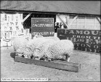 Sheep, Patrick Exhibit