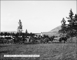 Two and Four Horse Rigs at Swan Lake Camp