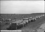 Deseret Sheep Company, Rams and Yards