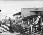 Paperworth and Son Exterior of Cattle Pens