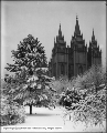 Temple Square, Snow Scene in Temple Grounds