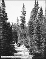 Big Cottonwood Canyon, Creek Below Brighton