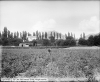 George E. Gunn Farm, Strawberry Patch Toward House