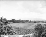 George E. Gunn Farm, Looking West From Hill