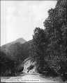 Ogden Canyon, Roadway and Trees