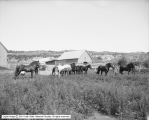 Fine Horses, Neponset Land and Livestock Company