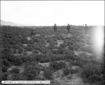 Lucerne Field Without Tailings, Chandler vs. Utah Copper Company