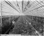 Salt Lake Floral Company Greenhouse Interior