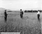Wheat Field, E. T. Walton, International Smelting and Refining Company