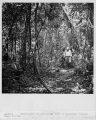 #R524-2.  Hikers along the Gumbo Limbo Trail in Everglades National Park, Florida.