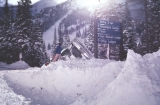 #10 Springs gully, 1979