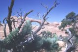 Skyline Arch, Arches National Park [08]