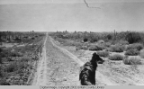 """Ward Cut"" road on Montez Creek by Gusher (Utah). Also known as ""Victory Park..."