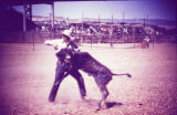 Bulldogging at Rodeo