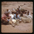 A group of Navajos shearing a sheep.