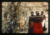 A group of Navajo woman with a sheep anging in a tree;