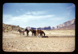 A photograph of Horses at Monument Valley