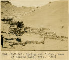 264.(N-M.54). Spring and fields, base of Second Mesa, Ariz. 1909.