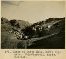 177. Sheep at Water Hole, Burro Spgs. Arizona. M.R.Campbell, photo. U.S.G.S.;