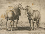"""Romanus and Equus Matronalis,"" from ""Equile"""