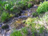 Alpine stream in Albion Basin (Alta, Utah)