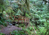 Cascade Range - Boulder River Trailhead (Washington) May 29, 2008 at 12:00 PM...